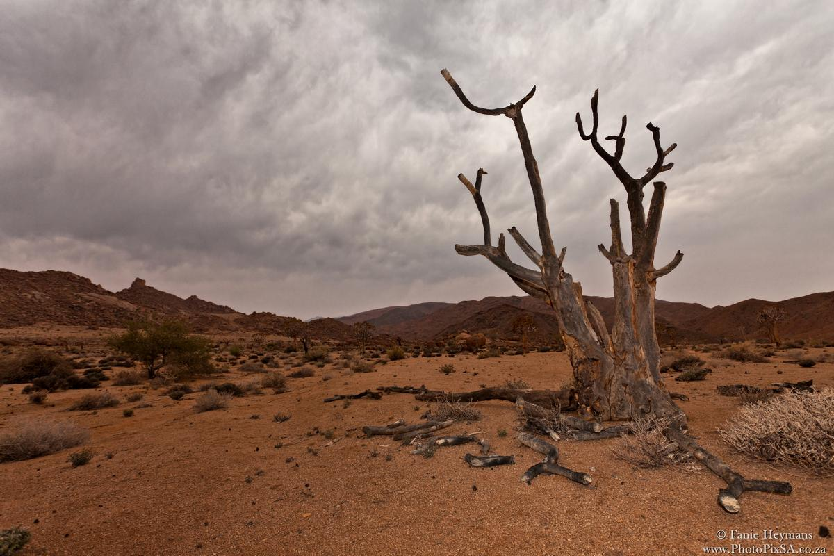 Dry Africa and Quiver Tree
