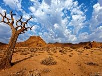Quiver tree at an Angle