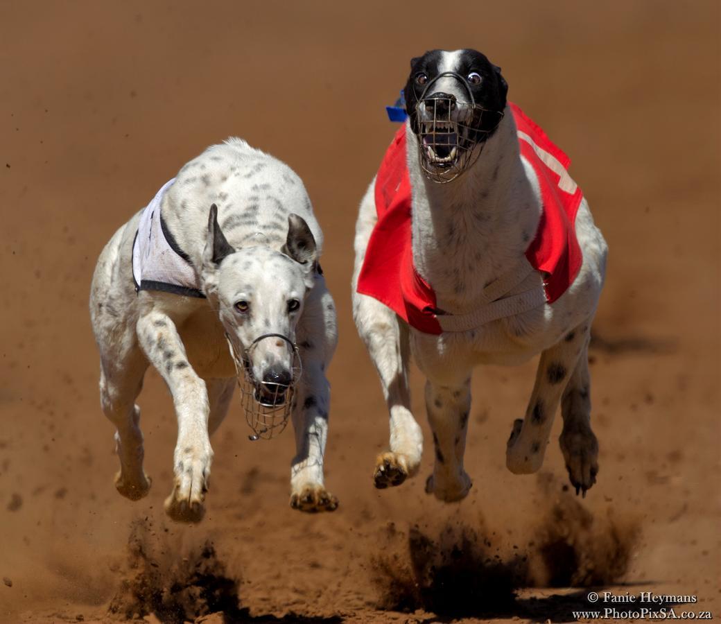 July Derby Greyhound Race