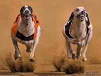 Greyhound Double airborne and pin sharp