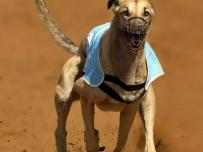 Greyhound slamming the Air Brakes