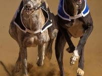 Greyhounds head to head