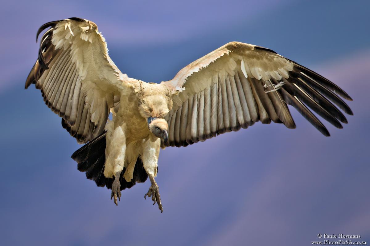Cape Vultue landing