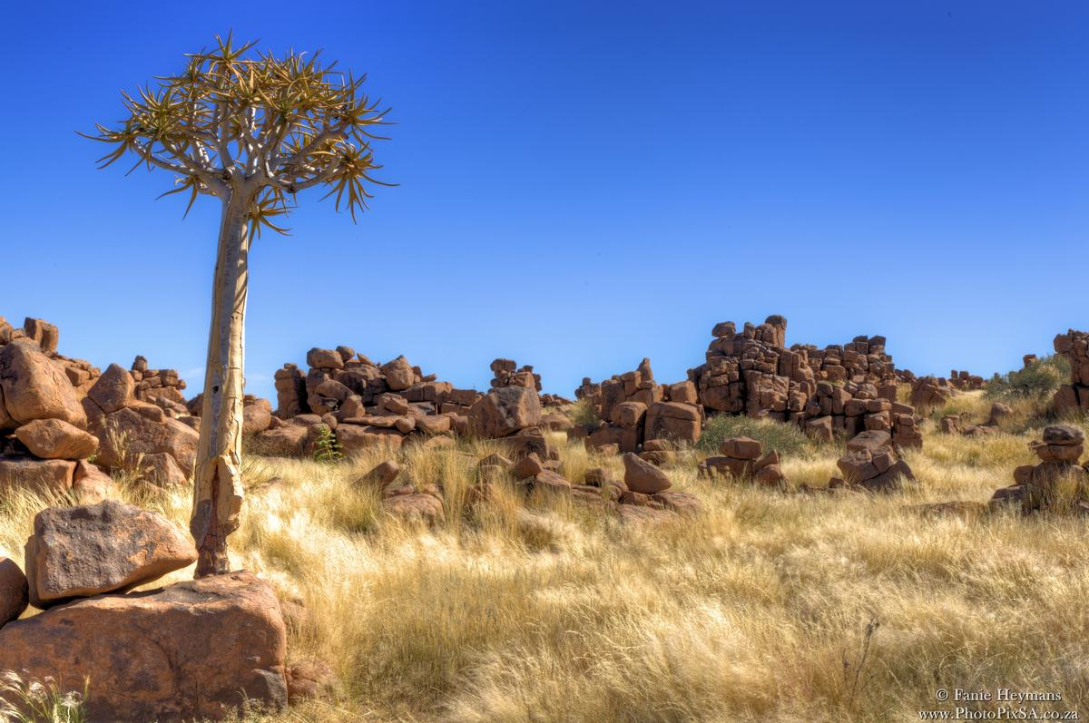 Quiver tree at The Giants Playground Keetmanshoop Namibia