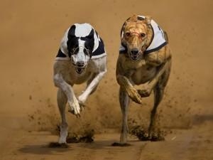 Greyhounds-Dust-Duel